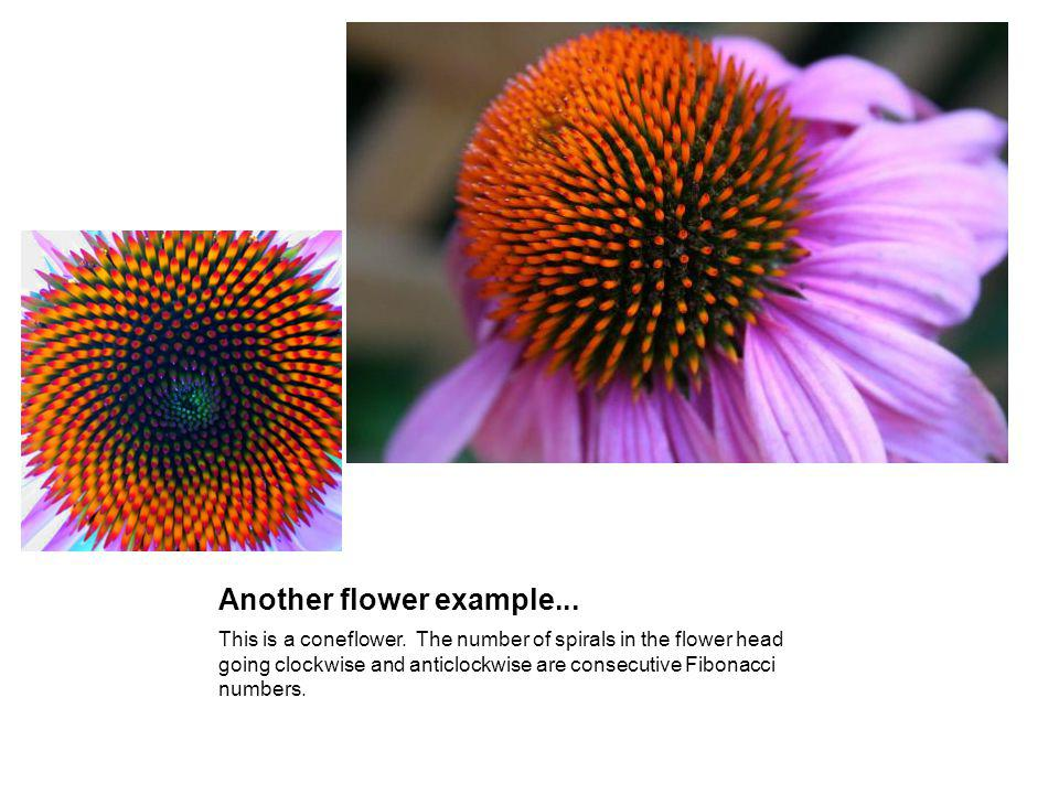 Another flower example...