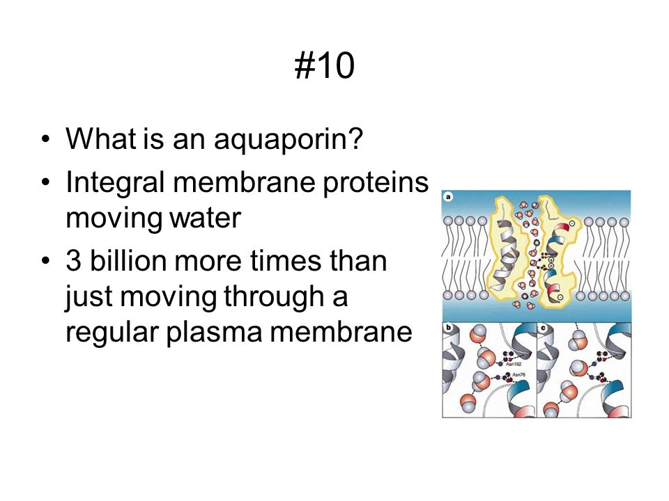 #10 What is an aquaporin Integral membrane proteins moving water