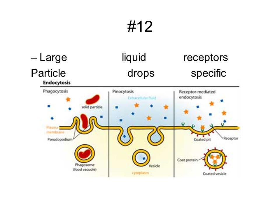 #12 Large liquid receptors.