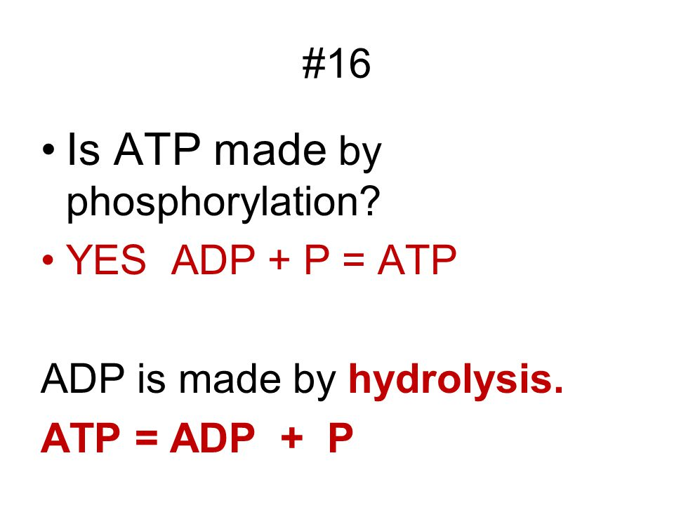 Is ATP made by phosphorylation