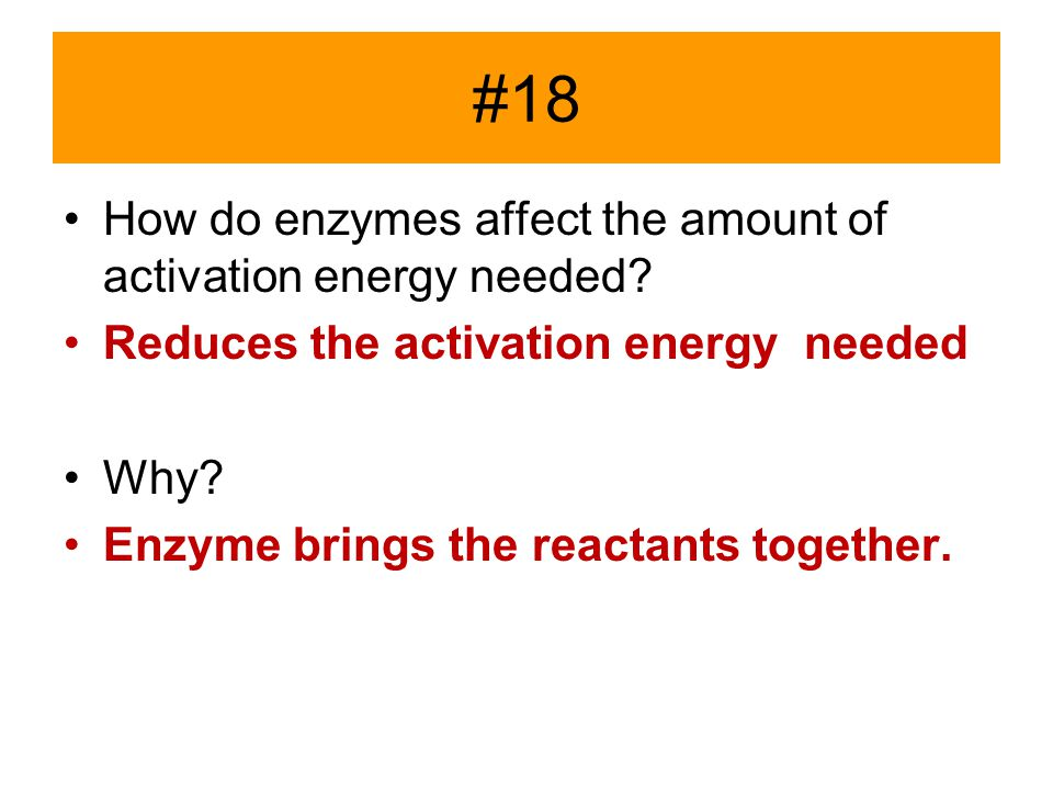 #18 How do enzymes affect the amount of activation energy needed