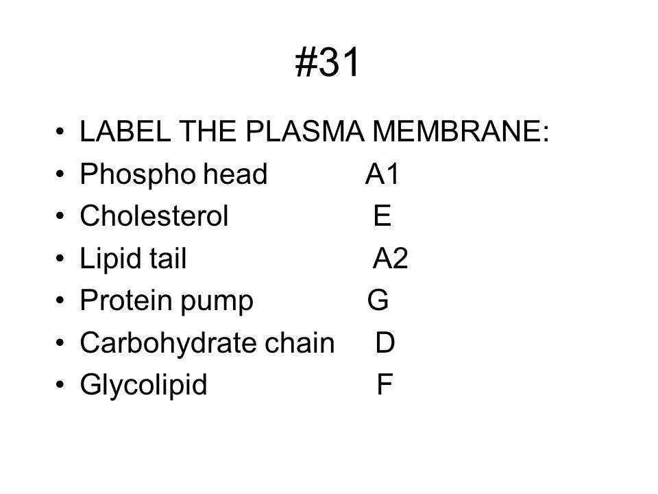 #31 LABEL THE PLASMA MEMBRANE: Phospho head A1 Cholesterol E