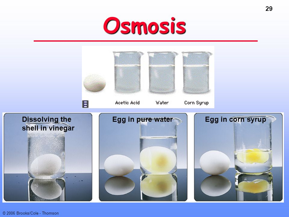 Osmosis Dissolving the shell in vinegar Egg in pure water