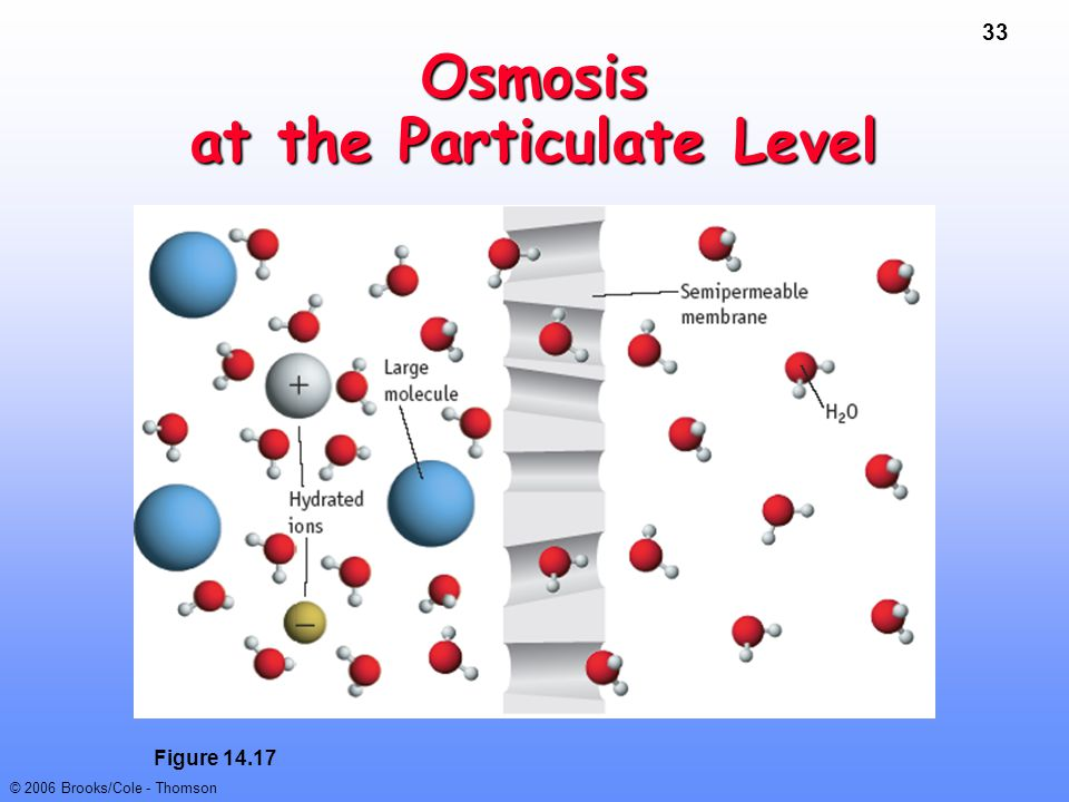 Osmosis at the Particulate Level