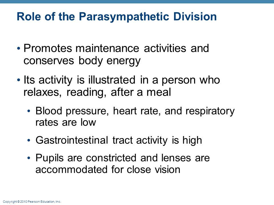 Role of the Parasympathetic Division