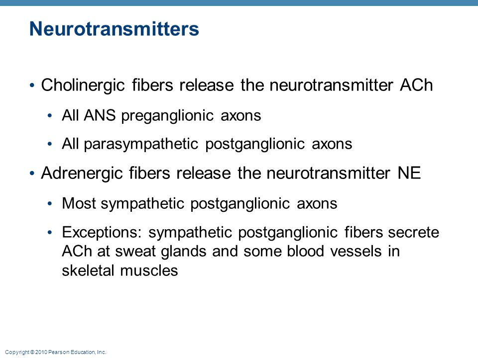 Neurotransmitters Cholinergic fibers release the neurotransmitter ACh