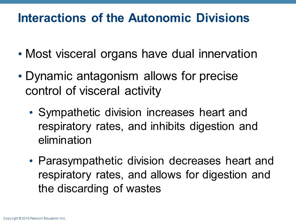 Interactions of the Autonomic Divisions