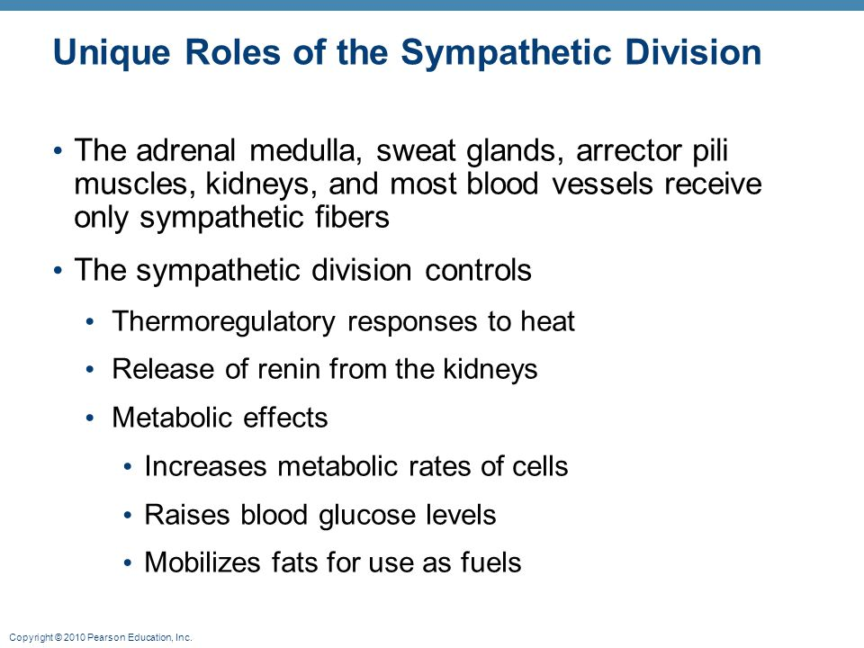 Unique Roles of the Sympathetic Division