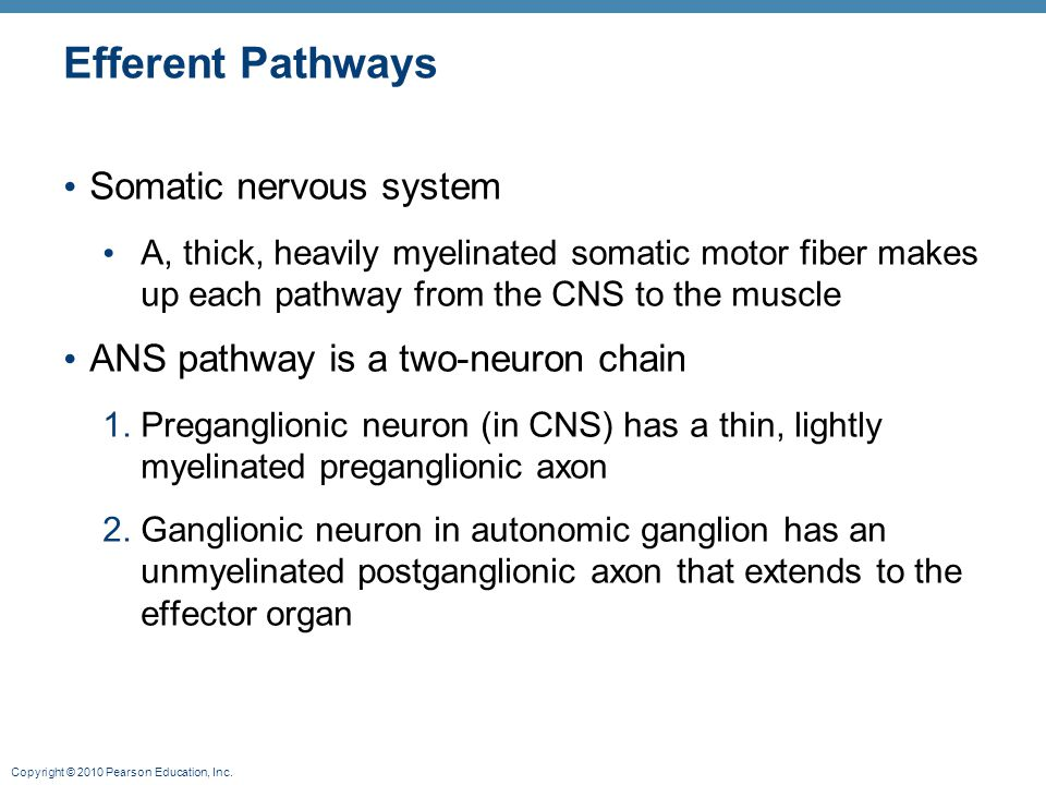 Efferent Pathways Somatic nervous system