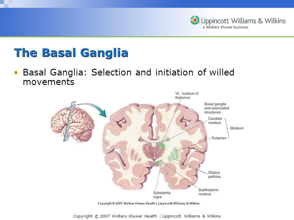 The Basal Ganglia Basal Ganglia: Selection and initiation of willed movements