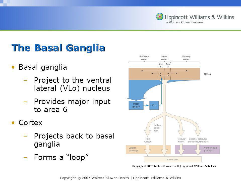 The Basal Ganglia Basal ganglia