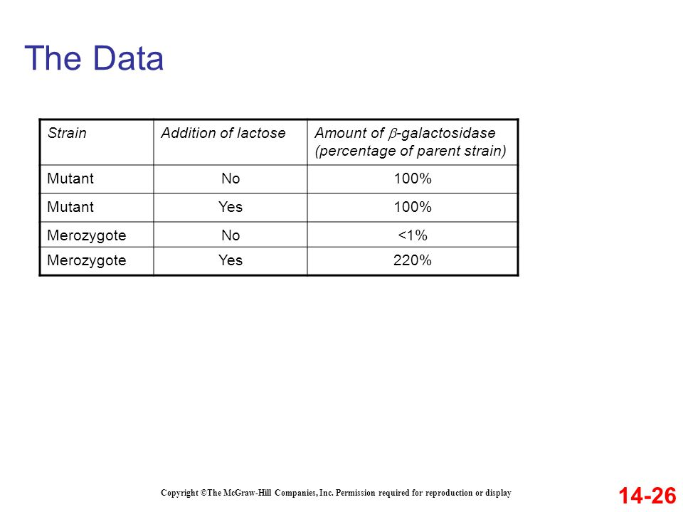 The Data 14-26 Strain Addition of lactose