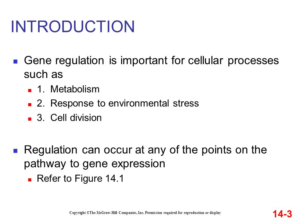 INTRODUCTION Gene regulation is important for cellular processes such as. 1. Metabolism. 2. Response to environmental stress.