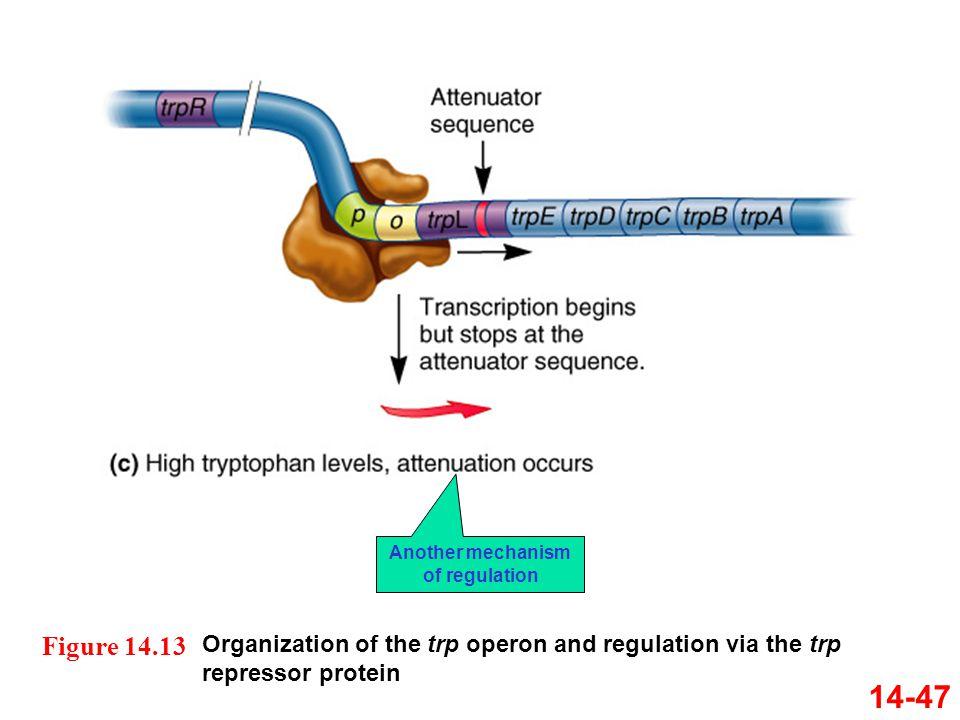 Another mechanism of regulation