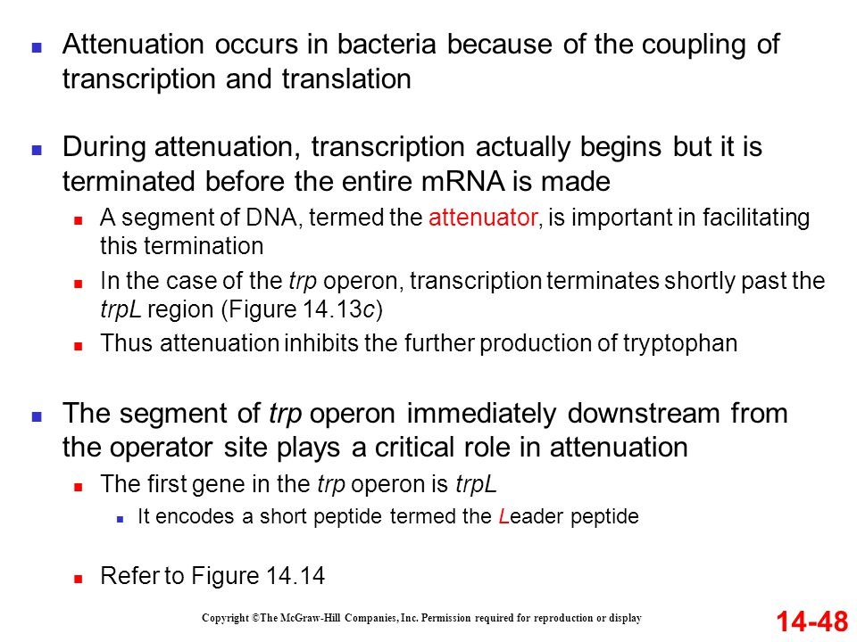 Attenuation occurs in bacteria because of the coupling of transcription and translation