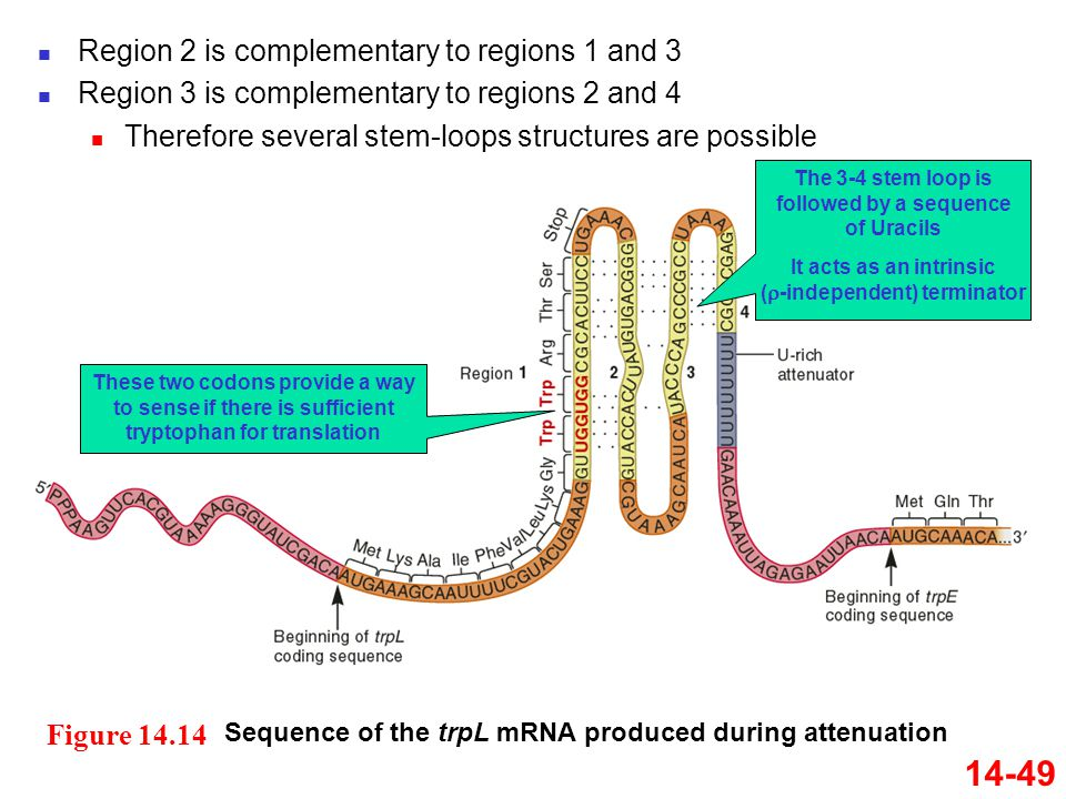 14-49 Region 2 is complementary to regions 1 and 3