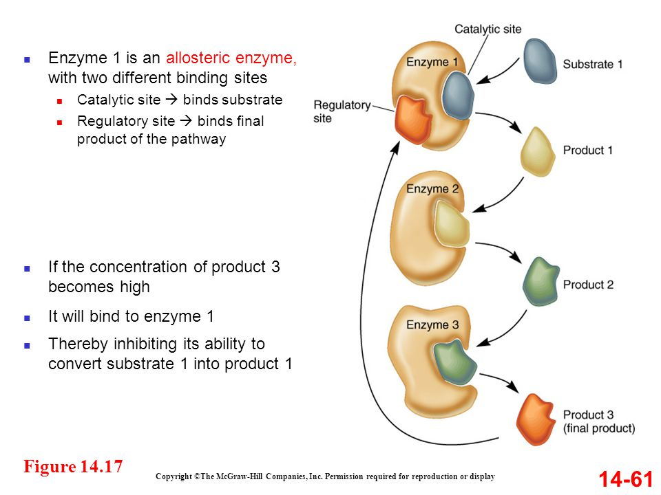 Enzyme 1 is an allosteric enzyme, with two different binding sites