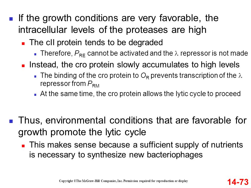 If the growth conditions are very favorable, the intracellular levels of the proteases are high