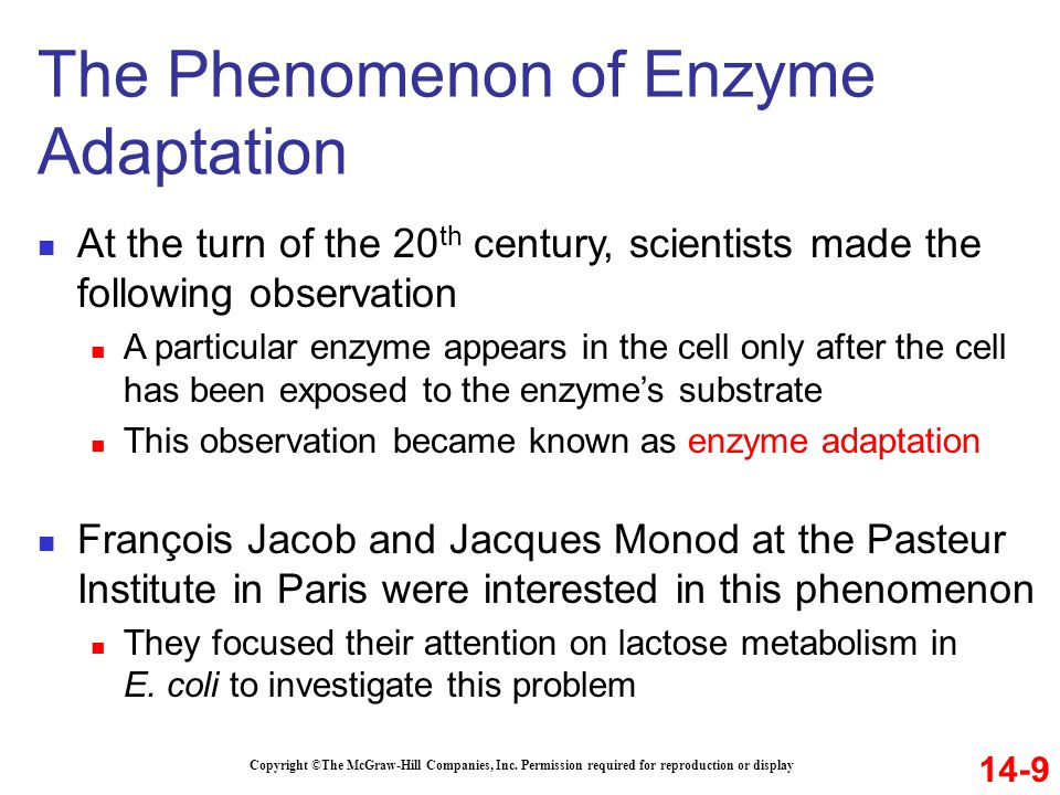 The Phenomenon of Enzyme Adaptation