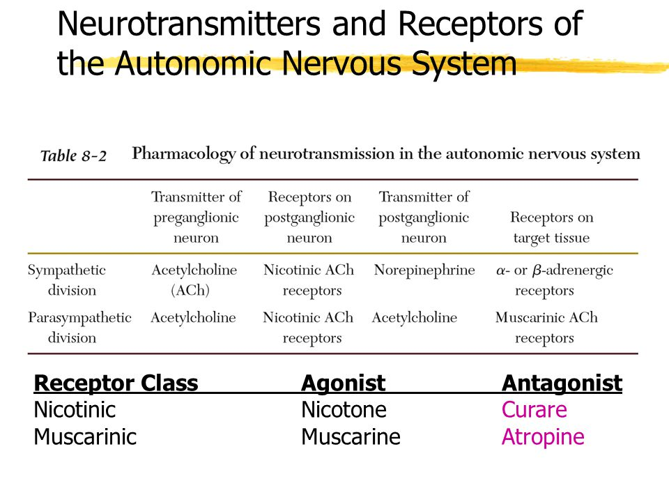 Neurotransmitters and Receptors of the Autonomic Nervous System