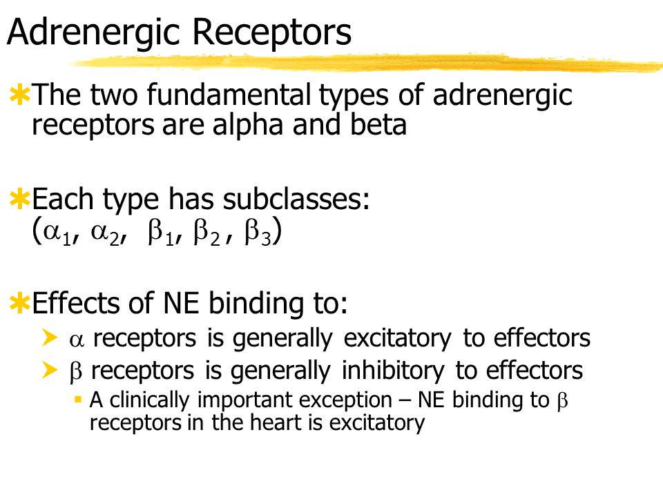 Adrenergic Receptors The two fundamental types of adrenergic receptors are alpha and beta. Each type has subclasses: (1, 2, 1, 2 , 3)