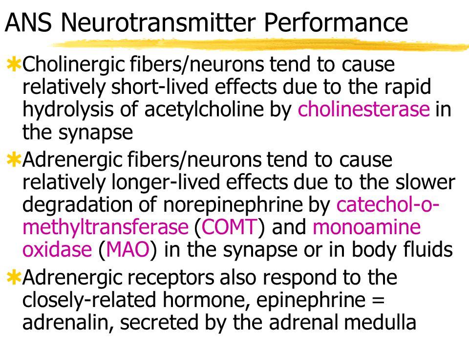 ANS Neurotransmitter Performance