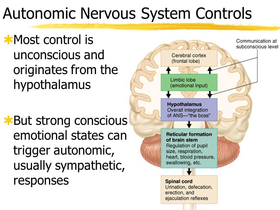 Autonomic Nervous System Controls