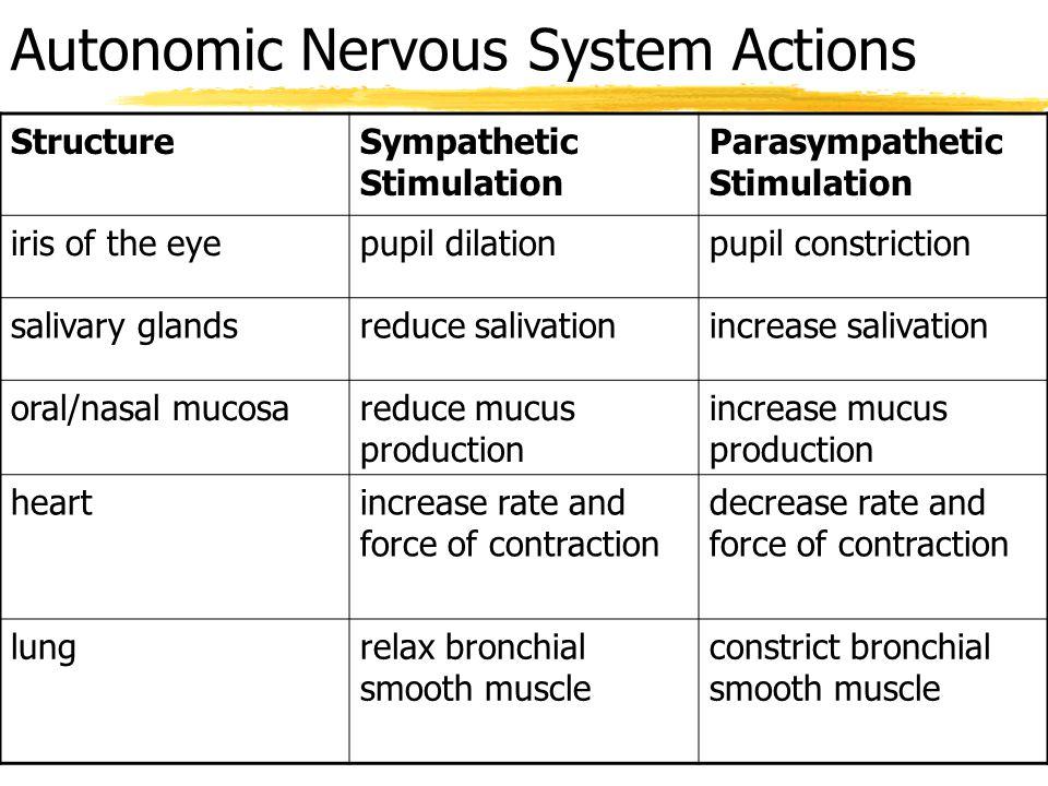 Autonomic Nervous System Actions