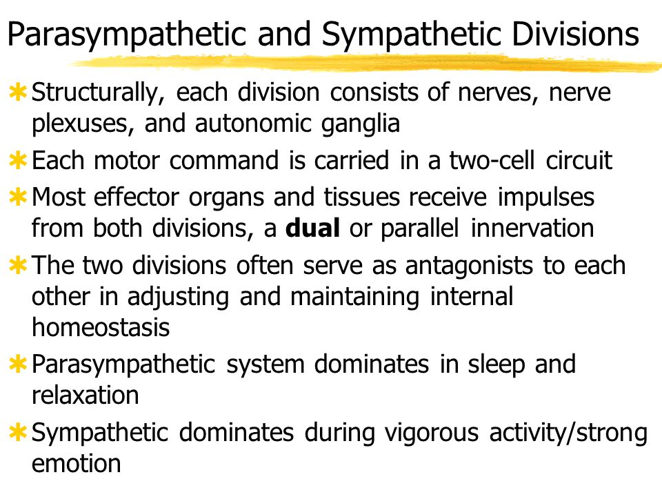 Parasympathetic and Sympathetic Divisions
