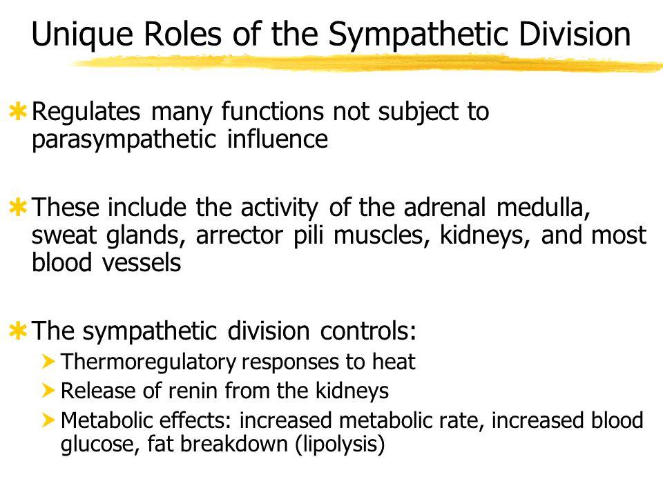 Unique Roles of the Sympathetic Division