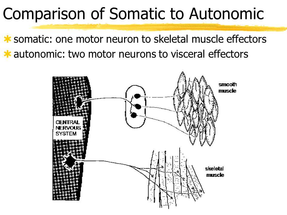 Comparison of Somatic to Autonomic