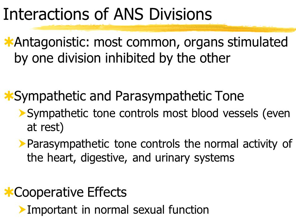 Interactions of ANS Divisions