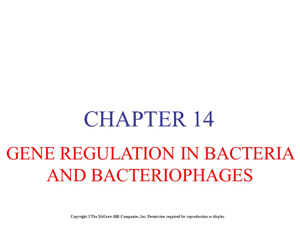 GENE REGULATION IN BACTERIA AND BACTERIOPHAGES
