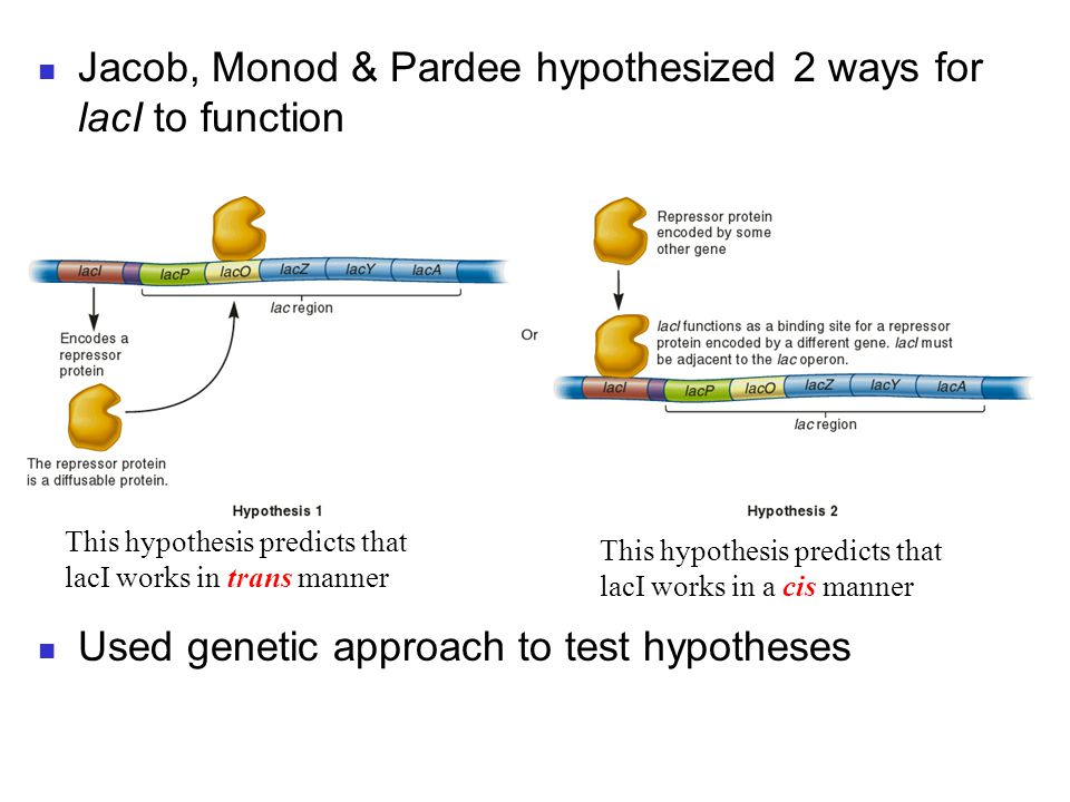 Jacob, Monod & Pardee hypothesized 2 ways for lacI to function