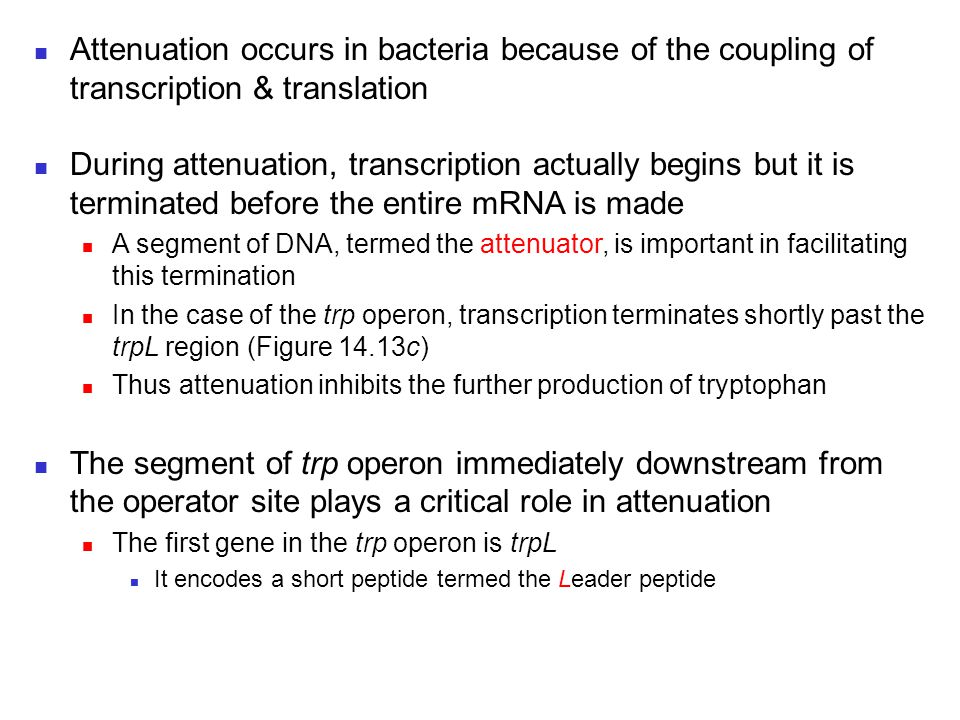 Attenuation occurs in bacteria because of the coupling of transcription & translation