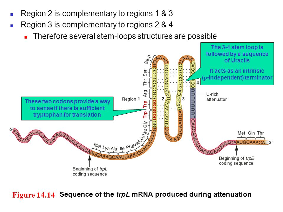 Region 2 is complementary to regions 1 & 3