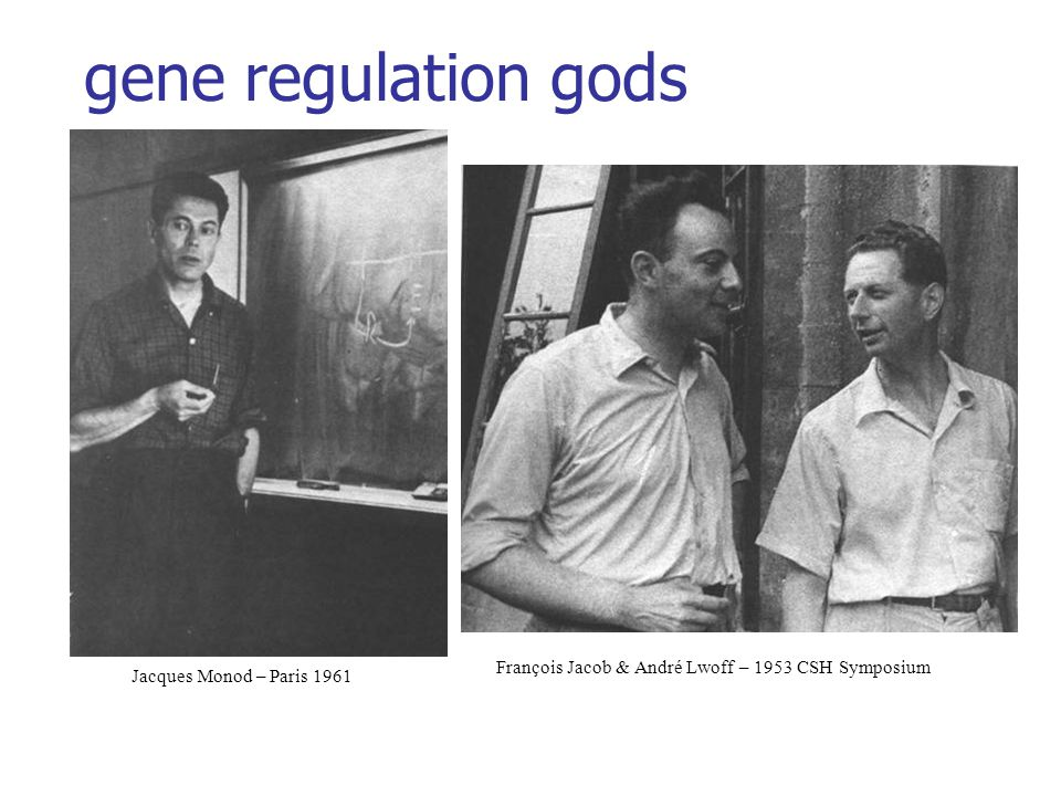 gene regulation gods François Jacob & André Lwoff – 1953 CSH Symposium