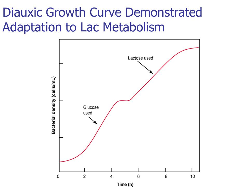 Diauxic Growth Curve Demonstrated Adaptation to Lac Metabolism
