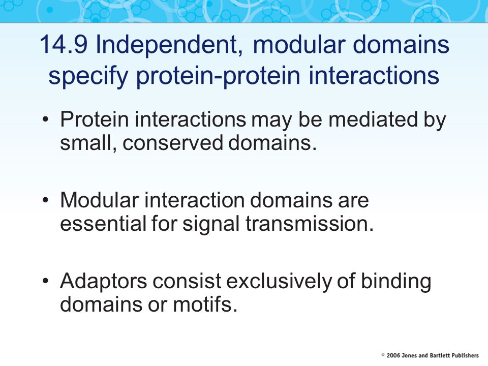 14.9 Independent, modular domains specify protein-protein interactions