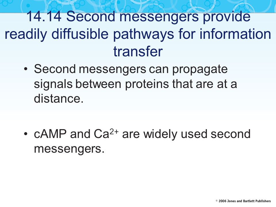 14.14 Second messengers provide readily diffusible pathways for information transfer