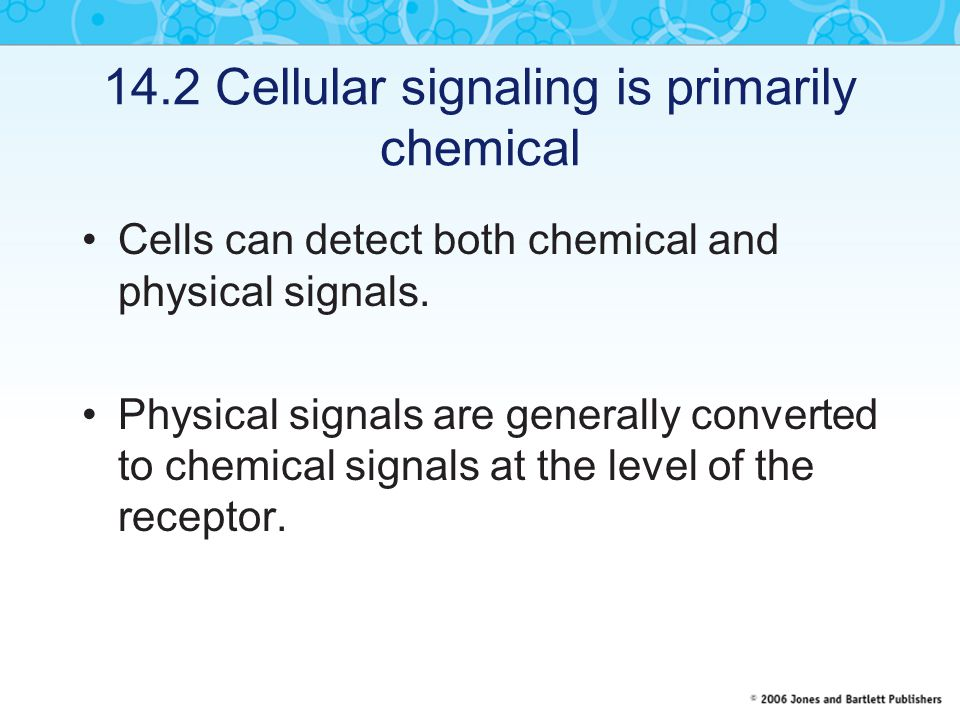 14.2 Cellular signaling is primarily chemical