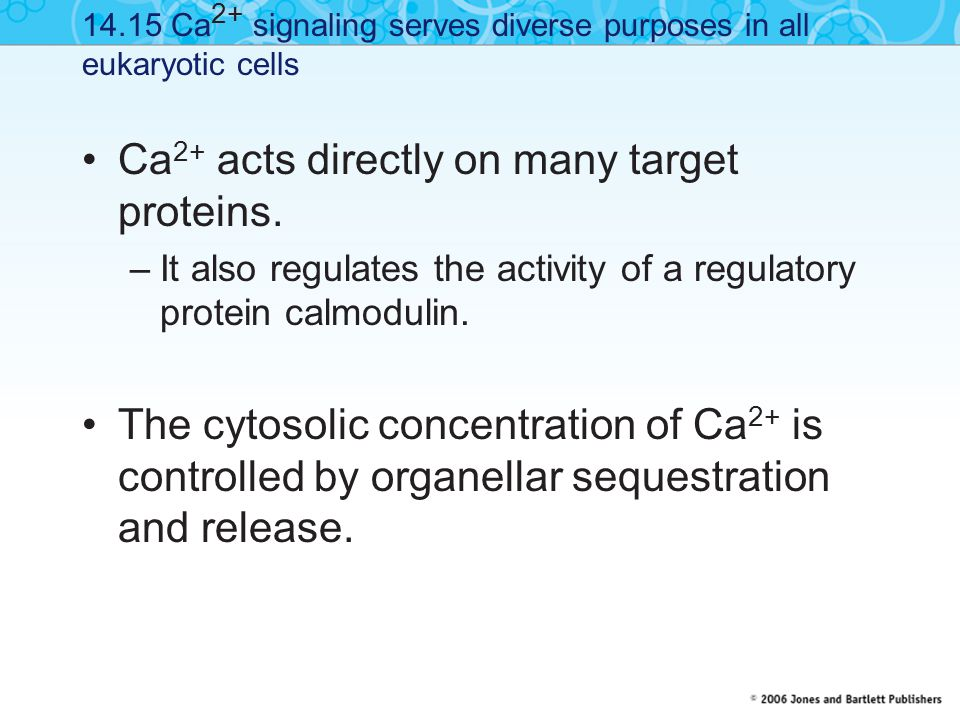 Ca2+ acts directly on many target proteins.