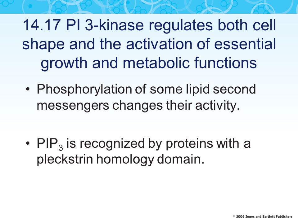 14.17 PI 3-kinase regulates both cell shape and the activation of essential growth and metabolic functions