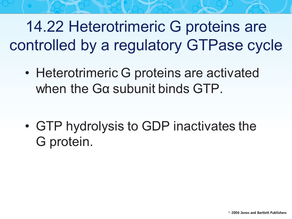 14.22 Heterotrimeric G proteins are controlled by a regulatory GTPase cycle