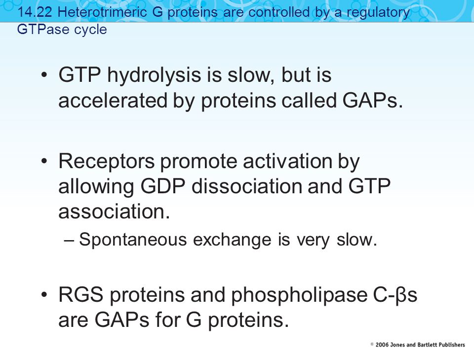 GTP hydrolysis is slow, but is accelerated by proteins called GAPs.