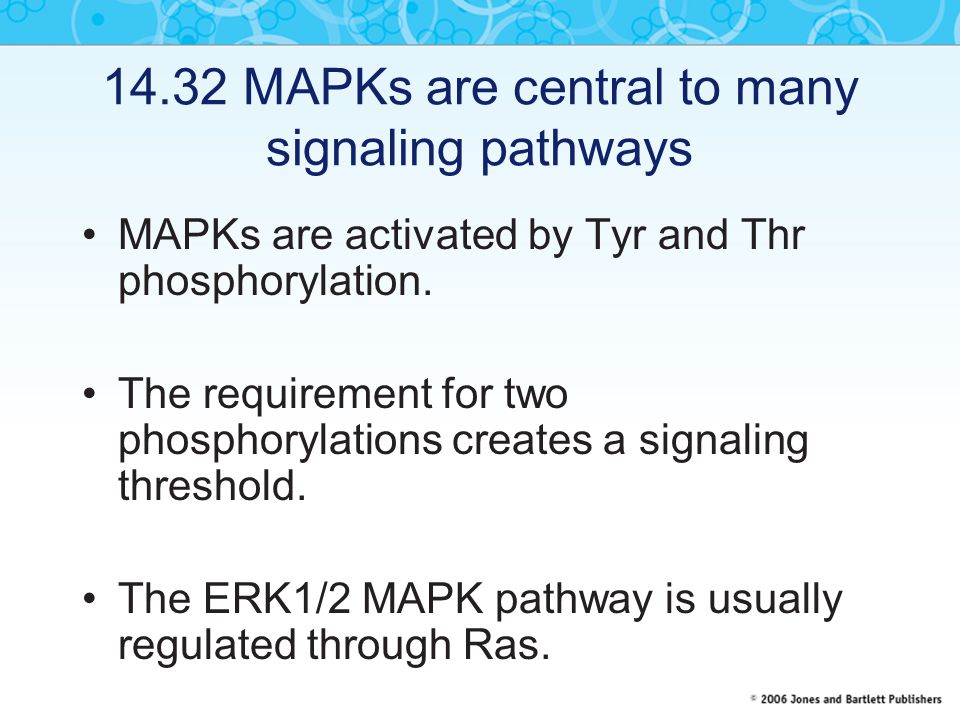 14.32 MAPKs are central to many signaling pathways