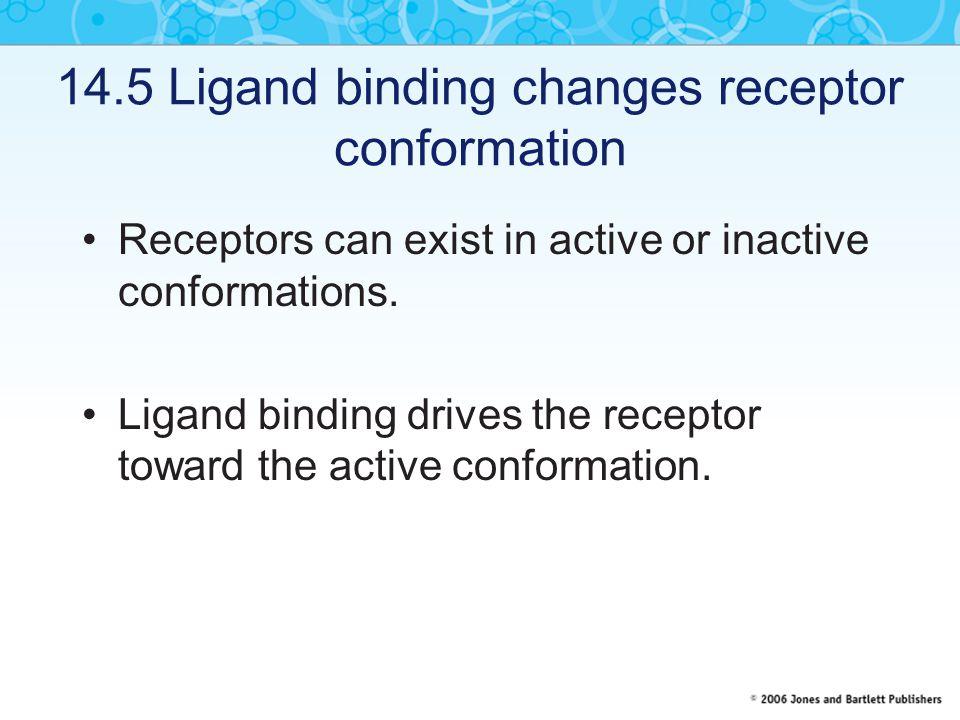 14.5 Ligand binding changes receptor conformation