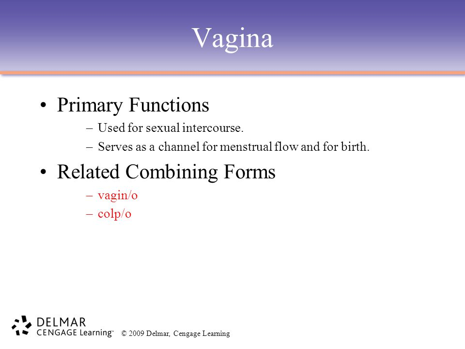 Vagina Primary Functions Related Combining Forms