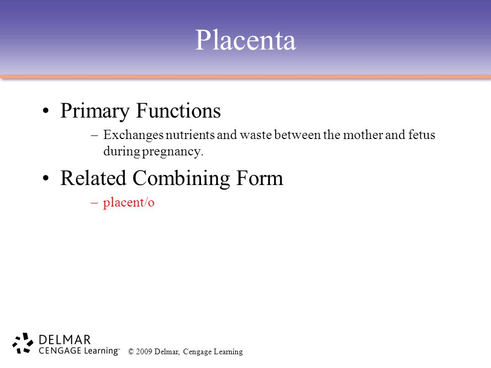 Placenta Primary Functions Related Combining Form