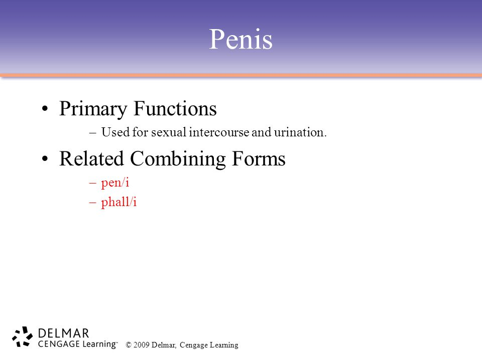 Penis Primary Functions Related Combining Forms